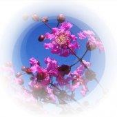 Масло розового дерева