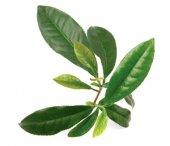 Отдушка Зеленый Чай