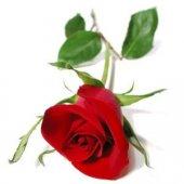 Отдушка Алая роза