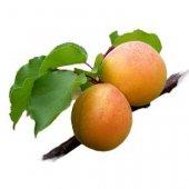 1269942953_apricots